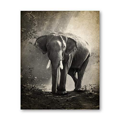 Elefante Fotografia Tela Poster Elefante Zanna Animali della giungla Pittura di arte della parete Decorazione vintage Immagine Home Room Decor-No Frame