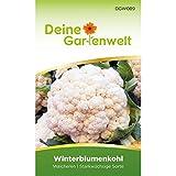 Winterblumenkohl Walcheren Samen   Brassica oleracea botrytis   Blumenkohlsamen   Saatgut für 80 Pflanzen