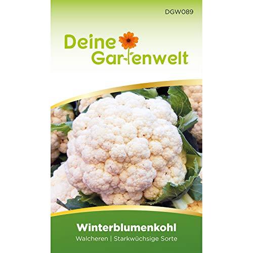 Winterblumenkohl Walcheren Samen | Blumenkohlsamen | Saatgut für Kohl | Blumenkohl winterfest