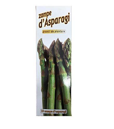10 Pz Zampe Di Asparago Verde Germogli Perenni Pronti Da Piantare Pianta Semi Asparagi