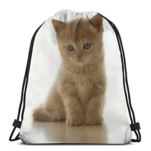 Lindo bebé gato gato sentado mascota bolsa de hombro bolsa de gimnasio mochila de viaje ligera para hombre y mujer 42,92 x 35,56 cm