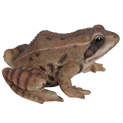 Vivid Arts Real Life Frog