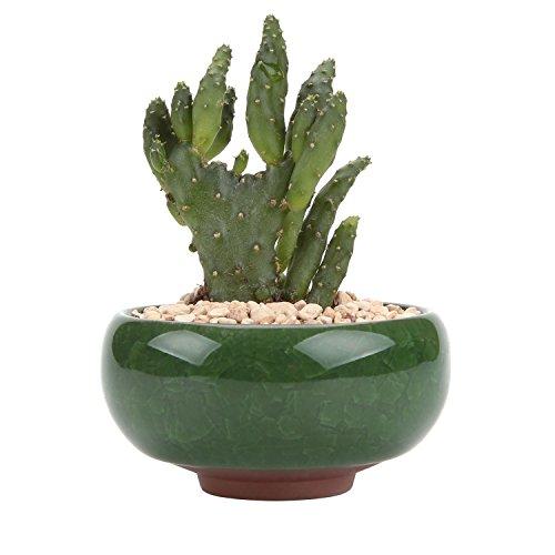 T4U 6.5cm 多肉植物鉢 ミニサボテン鉢 植木鉢 底穴付き 植物なし 6個入り 誕生日 ギフト インテリア 飾り