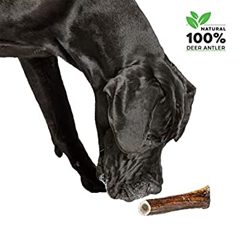 100% Naturel Bois de Cerf pour Chien Corne Jouet Os a Mâcher, Taille X-Large