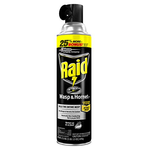 in budget affordable Raid Wasp & Hornet Spray – 17.5 oz – 3 packs