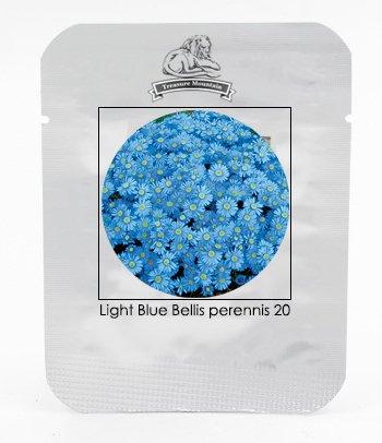 graines Blue Light Bellis Perennis Daisy fleurs Heirloom 'Zhui Meng', Professional Pack, 20 graines / Pack, Très Beau