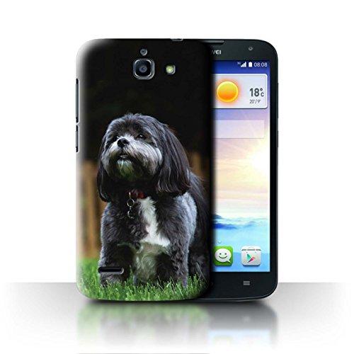 Hülle Für Huawei Ascend G730 H&/Eckzahn Rassen Shih Tzu Design Transparent Ultra Dünn Klar Hart Schutz Handyhülle Case
