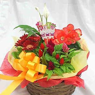 季節の鉢植え 寄せ鉢ギフトM 3から4種類の鉢花や観葉植物をかごにおまかせアレンジ お祝い 誕生日プレゼント