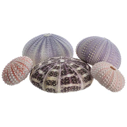Sea Urchin Collection | 5 Assorted Sea Urchins | Coastal Decorations | Plus Free Nautical eBook by Joseph Rains