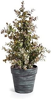 Napa Home & Garden Eucalyptus Plant Potted 18