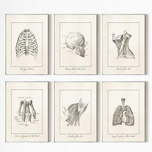 ZYQYQ cuadro sobre lienzo para pared anatomía humana corazón cabeza impresión nórdico cartel Vintage imágenes para clínica médico enfermera decoración 30x46cmx6 sin marco