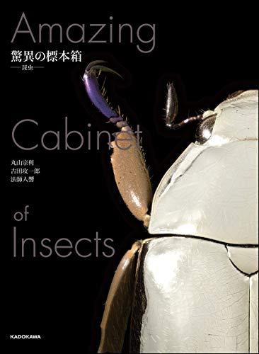 驚異の標本箱 -昆虫-の詳細を見る