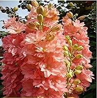 4:100花の種種子Delphinium美しい花植物ハウス植物フラワーガーデン