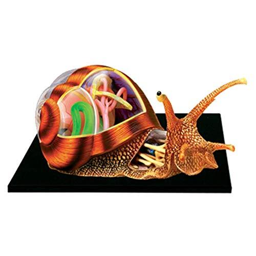 RUXMY Anatomisches 4D-Schneckenorganmodell, 32 abnehmbare Organe und Körperteile Anatomisches Tiermodell - für Biologie Tiermedizinisches Lehrmodell, Puzzle-Montagespielzeug