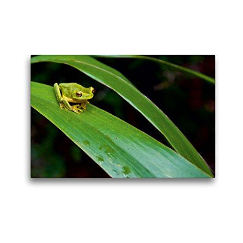 CALVENDO Premium Textil-Leinwand 45 x 30 cm Quer-Format Frosch in Australien, Leinwanddruck von Aussiefreak