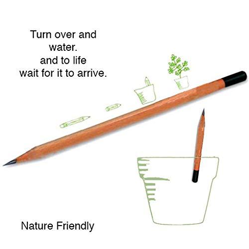 Living Pencil - Pencil - Sharpened Seed Pencil - Wooden Pencils - School Pencil - Lead Pencil - Classroom Supplies