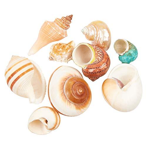 NBEADS 9 piezas de conchas grandes de color mezclado, conchas de mar naturales para decoración de bodas, fiestas temáticas de playa, decoración del hogar, manualidades de bricolaje