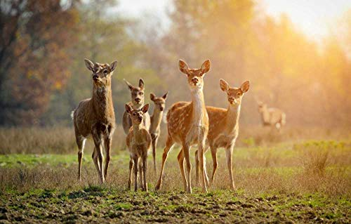 NNNGTAOCER Jigsaw Puzzle 1500 Piece For Adults Puzzle 3D Wooden Classic Puzzle Sika Deer Family Puzzles For Creative Gift Home Decor 34X22In