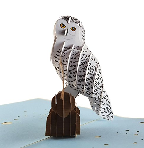 iGifts And Cards Magical Owl 3D Pop up Greeting Card Animal, Zoo, Bird, Cute, Nocturnal, Fun,...