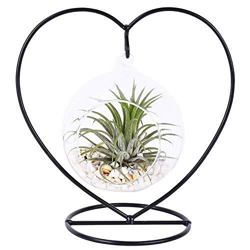 Sotoboo - Vase charmant à suspendre en verre transparent avec un support en métal noir - Décoration - Pour un terrarium ou des succulentes Heart Shelf+Ball