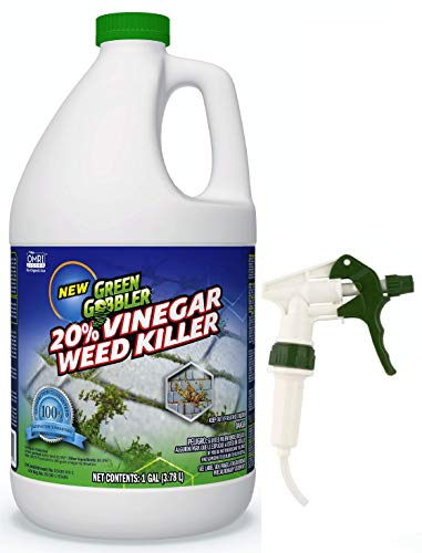 Best Patio Weed Killer