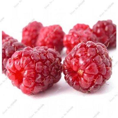 Bonsai framboise mûre graine noire Berry Blackberry vivace arbre plante délicieux Succulent Fruit meilleur cadeau pour enfant 400 Pcs 1