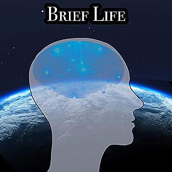 Brief Life