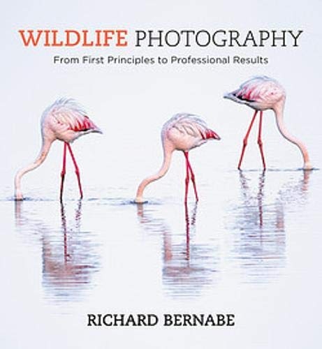 Wildlife Photography: An expert guide