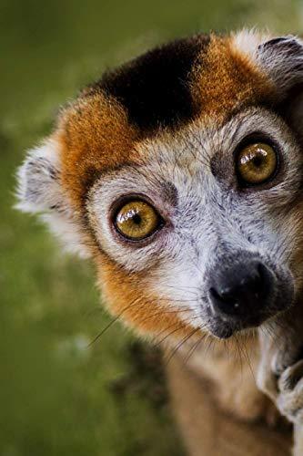 Notebook: Lemur Journal, Ruled Notebook/Journal - Lined Journal College Ruled, 6