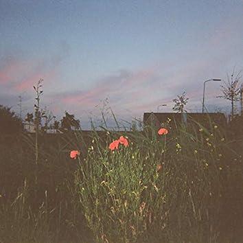 flowerjazz
