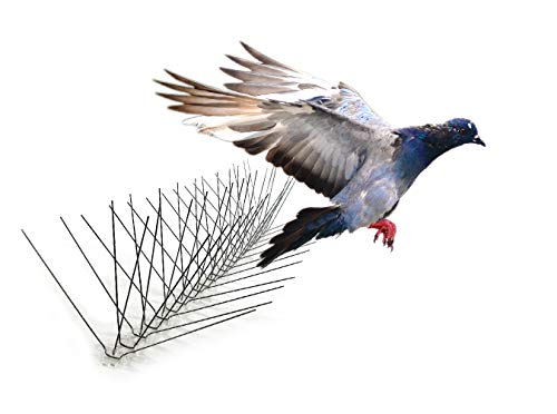 Bird-X Extra Wide 8-inch Stainless Steel Bird Spikes - Metal Roof Guard, Pigeon and Bat Deterrent, Animal and Pest Control Supplies, Covers 50 Feet
