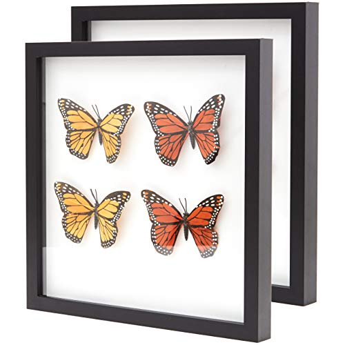 Super-Sturdy, Real Wood 12x12 Shadow Box Frame 2pk. Hardwood Display with Real Glass. Best Shadowbox to Showcase Photos, Tickets, Wedding Bouquets, CDs, Medals, Awards, Seashells and Insects