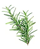 Rosemary Fragrant Herb Seeds, 50 Seeds Per Packet, Non GMO Seeds, Isla's Garden Seeds