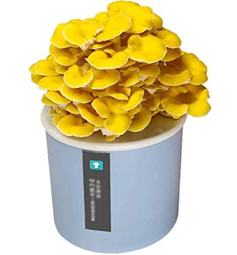 DBXOKK Pilze Züchten Set, Pilzzuchtset Champignons Bio, Anzuchtset Bonsai für Haus, Kultur Klein Anzuchtset für Kinderleicht, Ideales Geschenkpink-White Oyster Mushroom