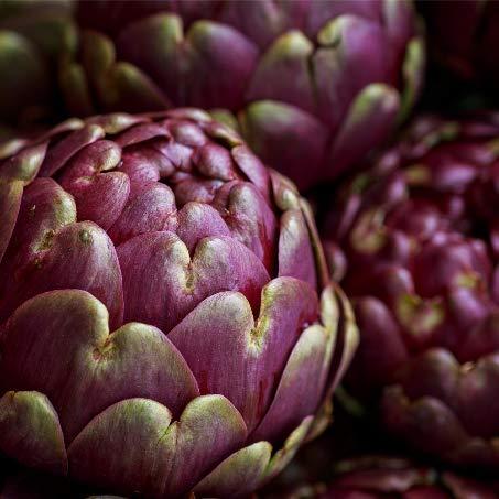 David's Garden Seeds Artichoke Colorado Star 4491 (Purple) 25 Non-GMO, Open...
