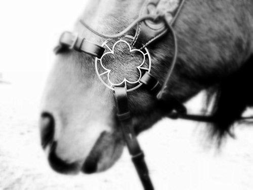 1 Paar Blumen Räder - PS Blumenzaum - Anemone - Gebisslose Zäumung, Bitless Bridle