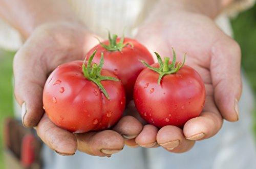 北海道最高級トマトジュース(180ml5本)食塩無添加プレミアムギフト[並行輸入品]