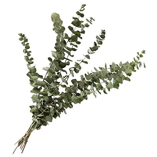 Natürlicher Eukalyptus