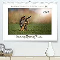 Niedliche Malinois Welpen (Premium, hochwertiger DIN A2 Wandkalender 2022, Kunstdruck in Hochglanz): Malinois Welpen entdecken die Welt (Monatskalender, 14 Seiten )