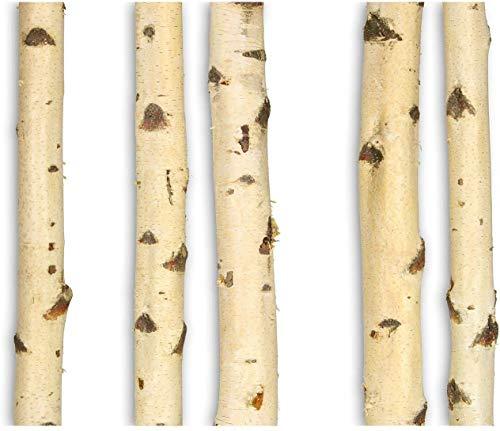 GREENHAUS Birkenstamm 250 cm 2er-Set Birke Massivholz aus Deutschland getrocknet Holzstamm Birkenholz Stamm Baumstamm Deko Raumtrenner