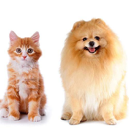 MeterMall 100 toallitas de limpieza para perros y gatos