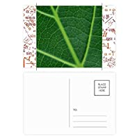 ダークグリーンの植物の自然のイラストパターン 公式ポストカードセットサンクスカード郵送側20個