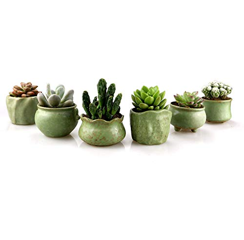 Green succulent pots