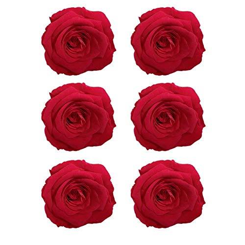 CAN_Deal 6er-Pack konservierte Rosen - Infinity-Bloom Rosenköpfe - Kopf-Ø ca. 5-6 cm, Rot