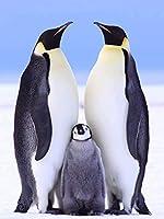 木製ジグソーパズルキッズおもちゃペンギン大人のための3つのパズルの家族5000ピース72x42in
