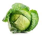 David's Garden Seeds Cabbage Dutch 2101 (Green) 200 Non-GMO, Open...