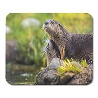 マウスパッド地上動物北米川カワウソかわいい哺乳動物自然マウスパッド用ノートブック、デスクトップコンピューターマットオフィス用品