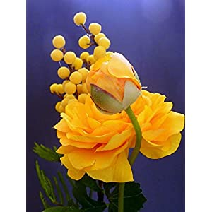 Yellow Blossom Spring Artificial Flowers Ranunculus-20 Inch By 30 Inch Laminated Poster With Bright Colors And Vivid Imagery-Fits Perfectly In Many Attractive Frames