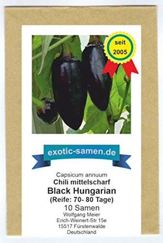 10 Samen Black Hungarian Chili mittelscharf