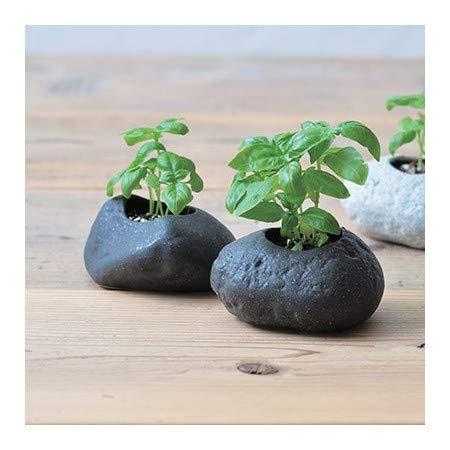 Kit Basilic pot en pierre